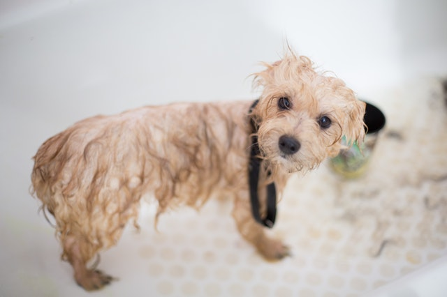 How To Give Your Dog a Bath