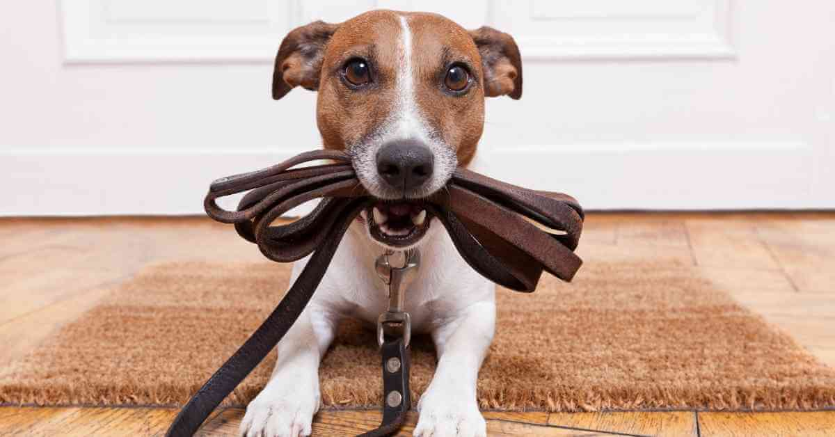 can dogs eat leather
