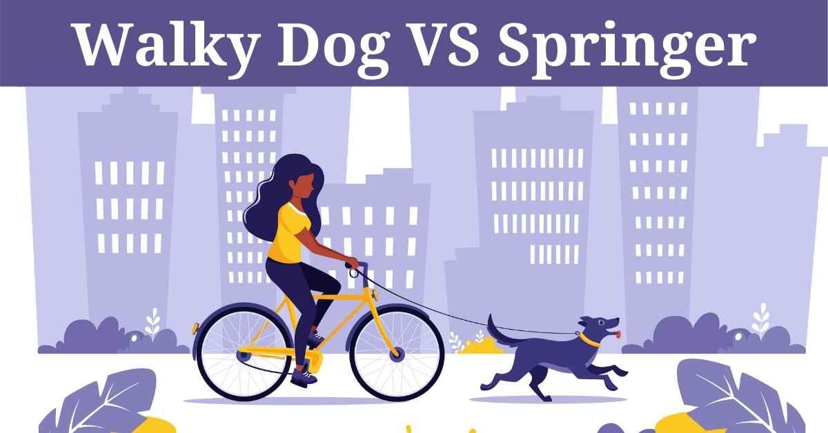 walky dog vs springer